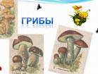 Презентация к занятию по развитию речи: «Что мы знаем о грибах?»